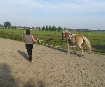 beleren jonge paarden