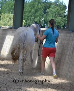schriktraining paard oefeningen