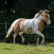 Nienke (Paardencoachingspraktijk Vica, Andijk)