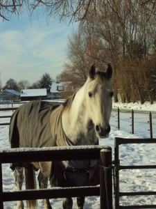 paardpietvanevelien